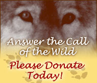 Answer the Call of the Wild - Please Donate Today!